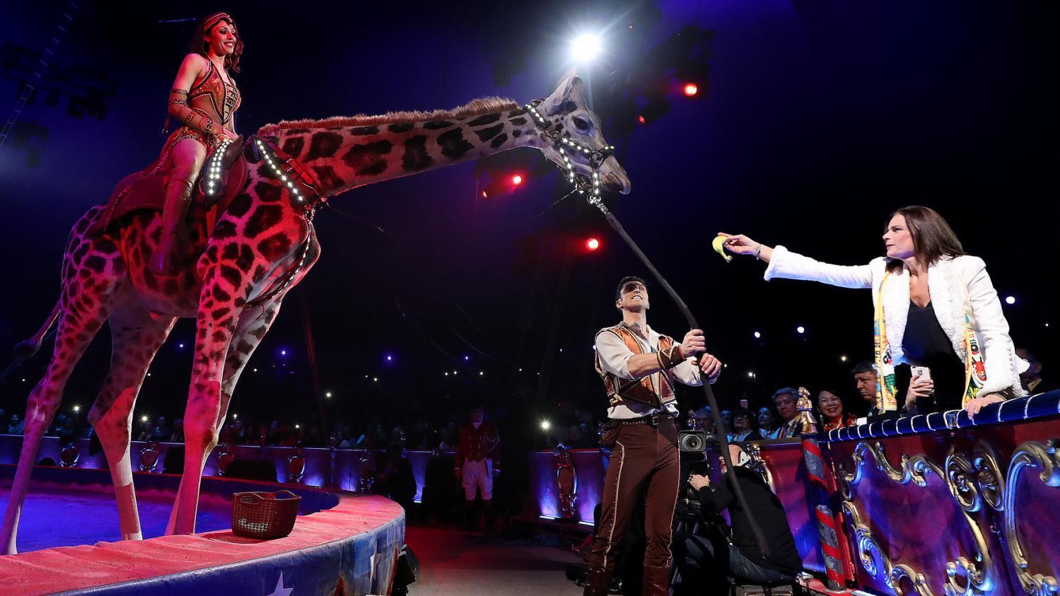 Stephanie de monaco et le cirque sebastien nogier pool afp